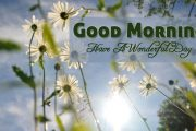 have a wonederful day