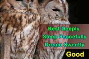 Rest Deeply Sleep Peacefully Dream Sweetly, Good Night