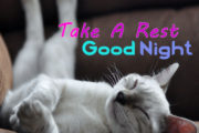Take A Rest, Good Night
